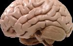 Факторы провоцирующее атрофию головного мозга