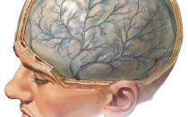 Симптомы менингита, принципы его лечения и профилактики