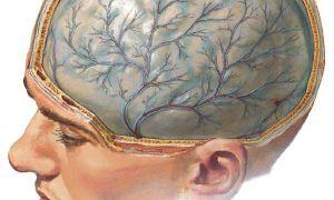 Симптомы и проявления менингита, от чего возникает, какие виды бывают, принципы лечения и профилактики