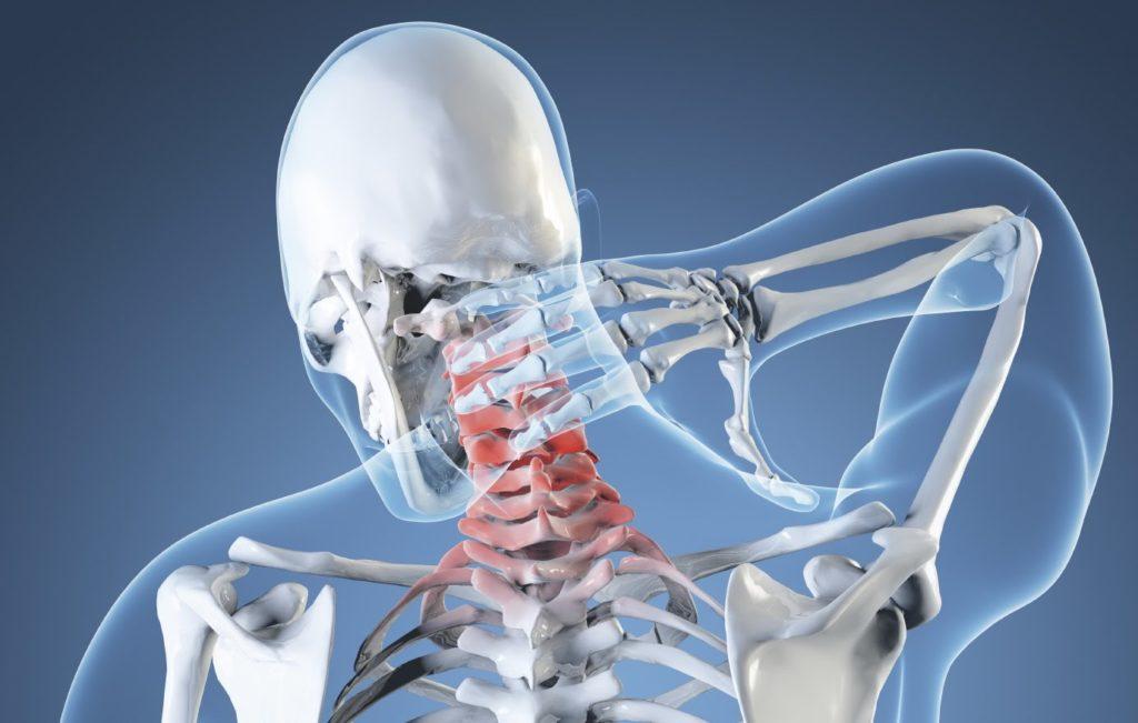 схема скелета человека