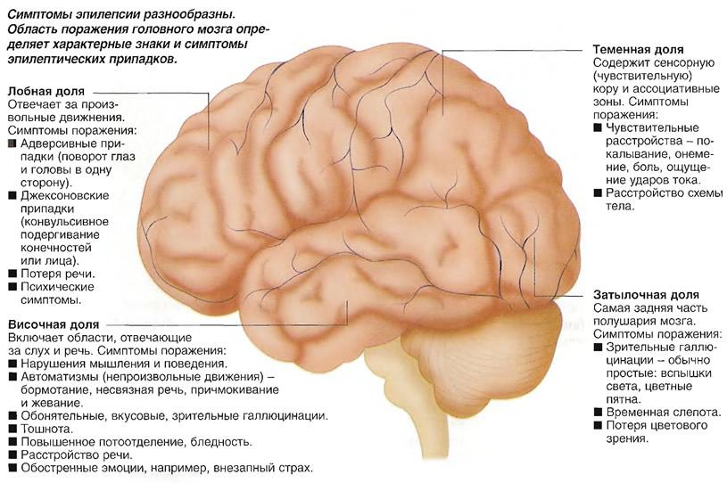 Эпилепсия может развиться спустя 10 лет после травмы головы