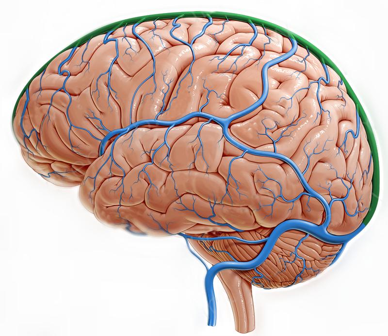 Венозная дисциркуляция, мозг