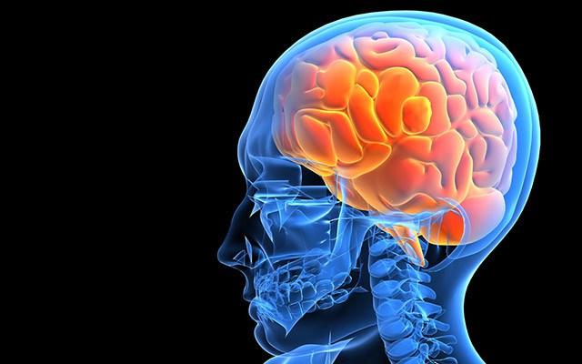 внутренние строение головы