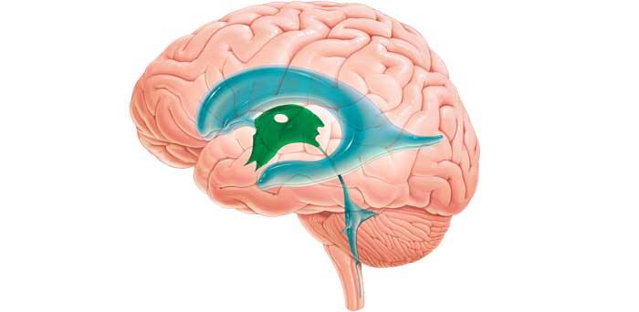 Увеличены желудочки головного мозга у грудничка