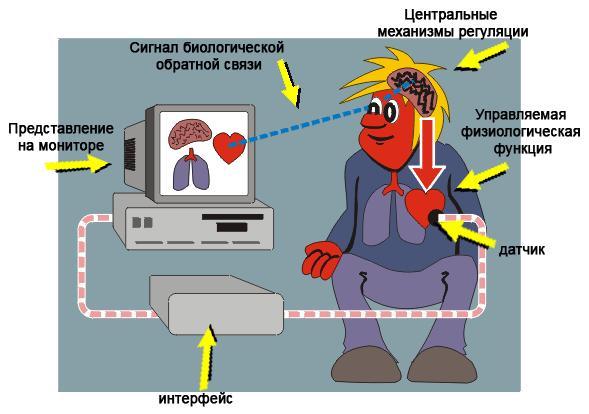 Метод биологической обратной связи