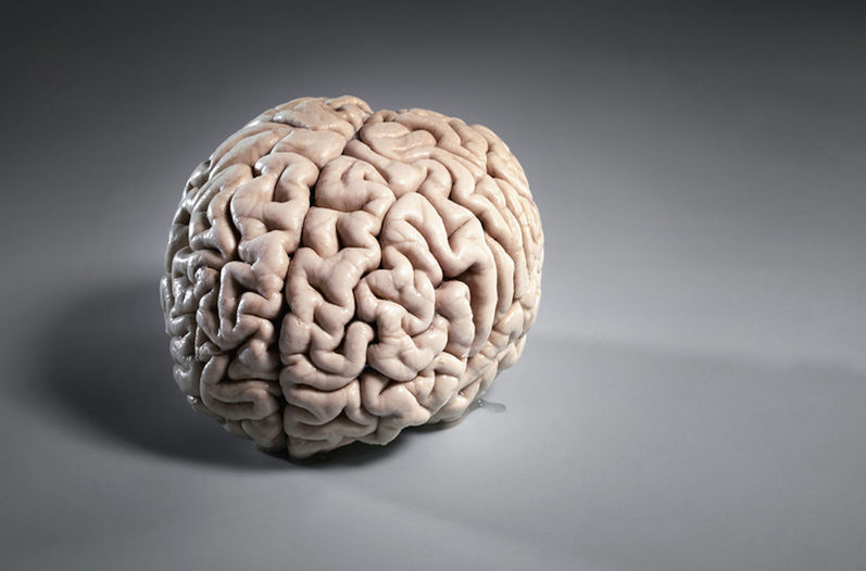 Болезни мозга и расстройства