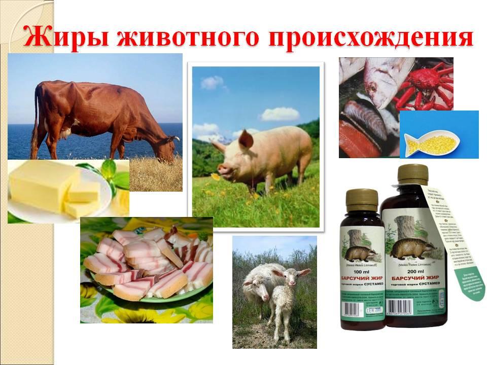 жиры животного происхождения