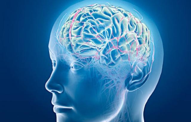 головной мозг схема